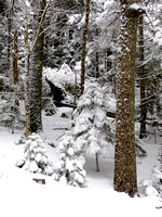 Winter Day in Acadia National Park