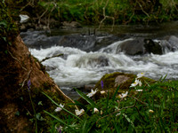 Spring Walk along the Bank of the Afon Dwyfor