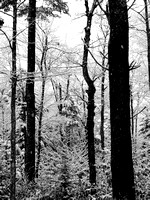 Early Snow in Black and White
