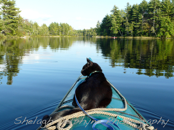 Shelagh Delphyne Photography Cats Kayaking With Solomon